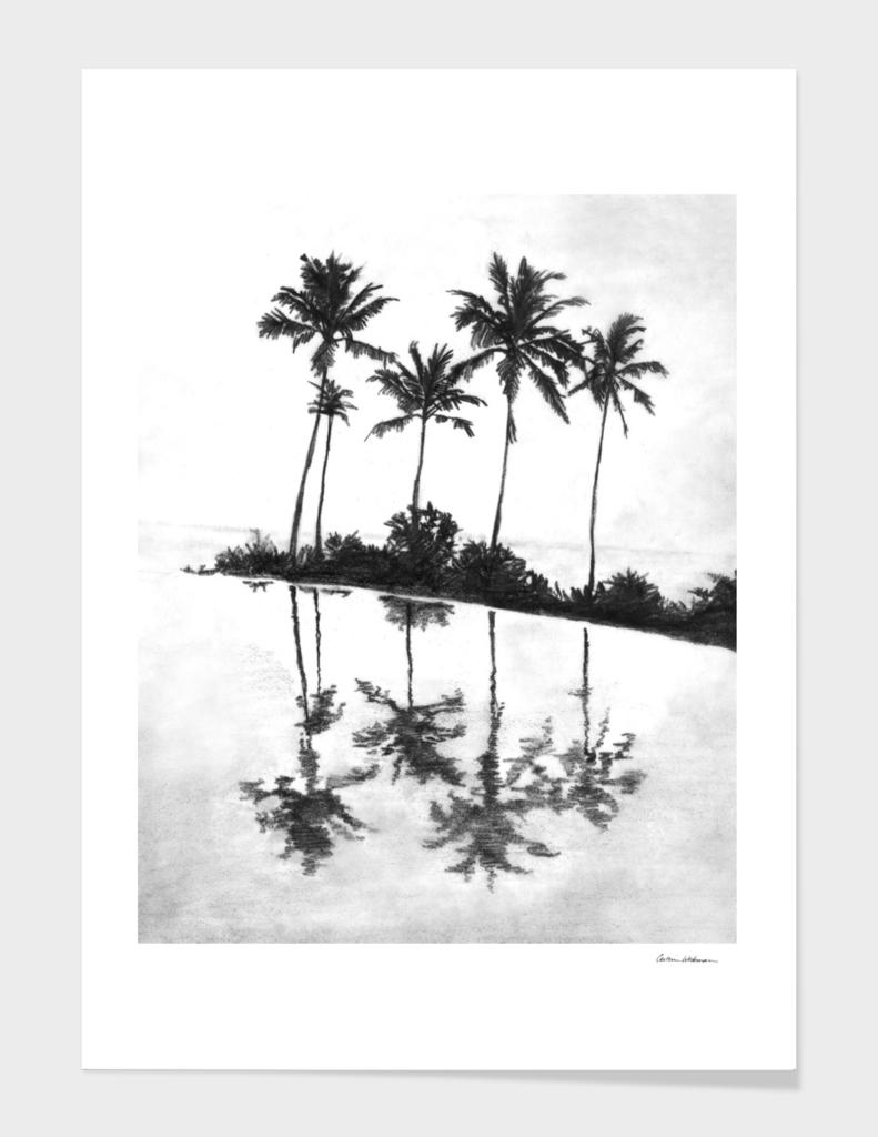 Palm Tree Reflections