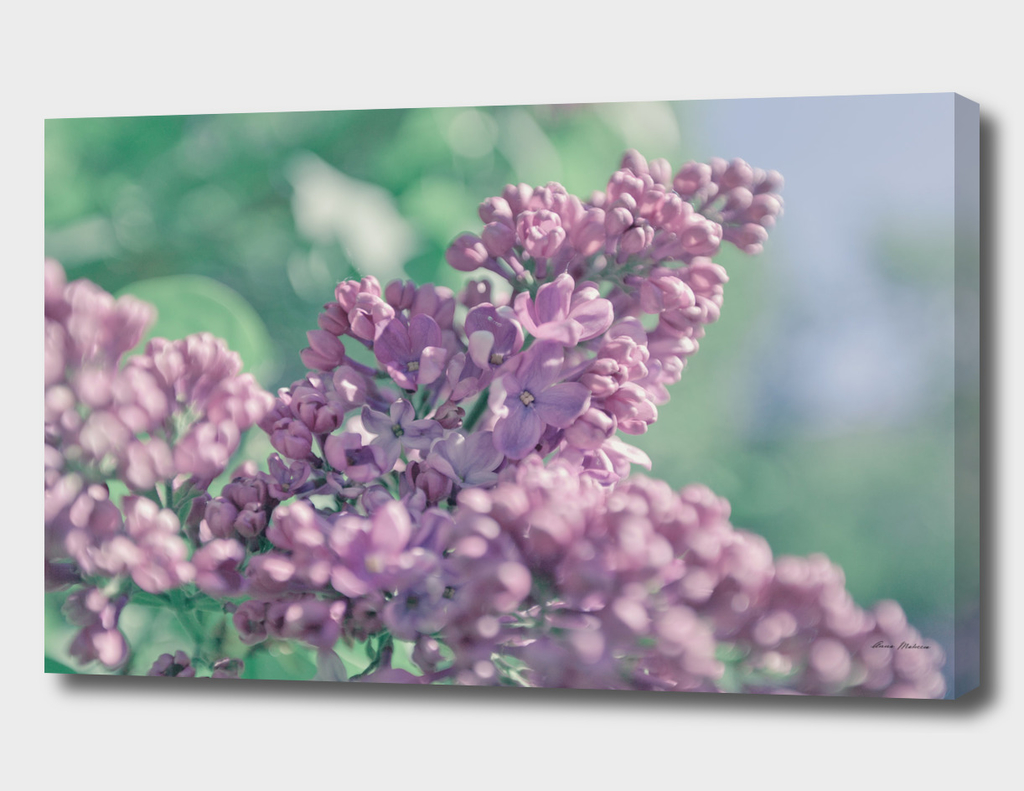 Beautiful lilac background. Pastel purple colors.