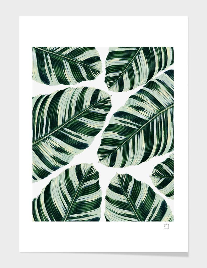 Tropical Foliage Pattern