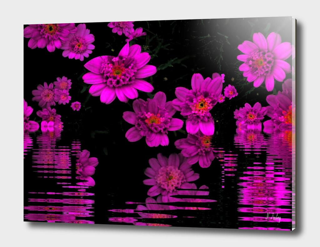 Bright Pink Daisies