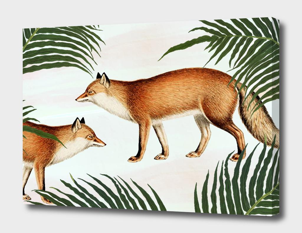 Red Fox Pair