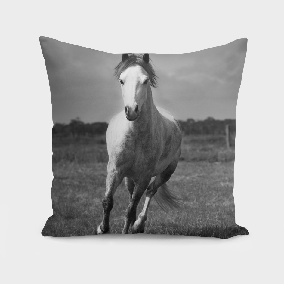Running Pony - Landscape