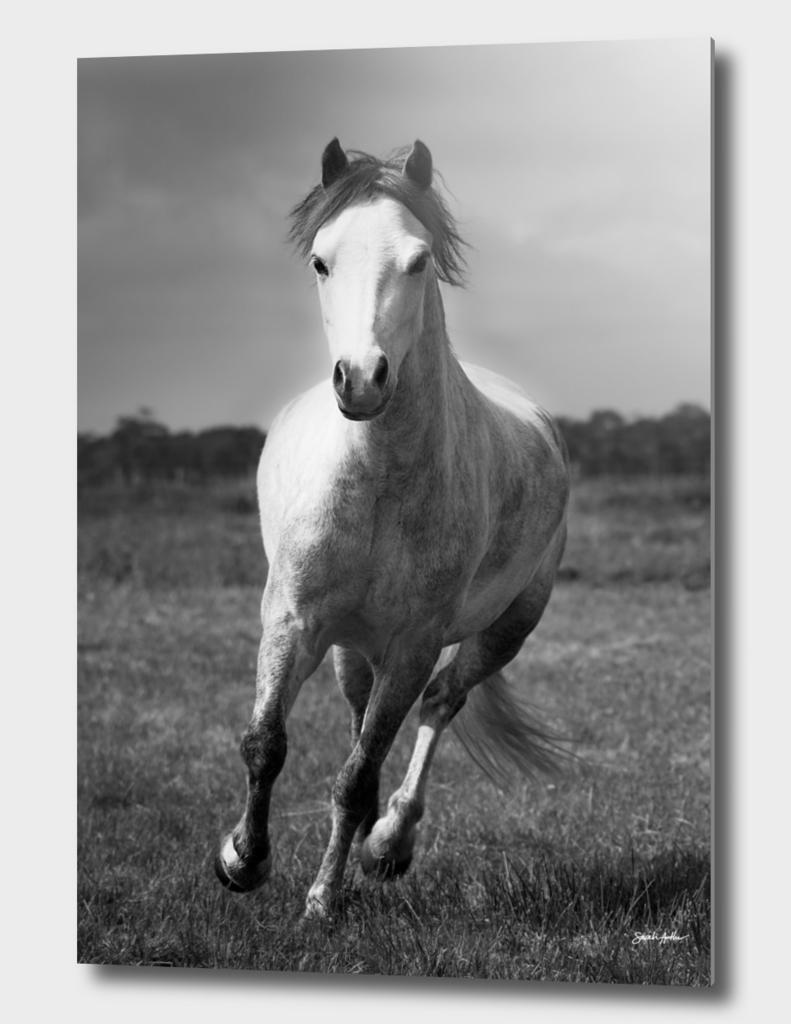 Running Pony - Portrait