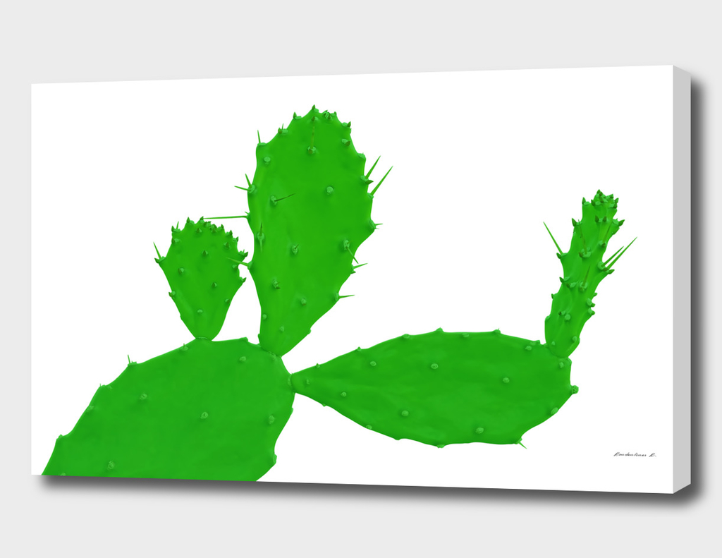 Cactus man with flower
