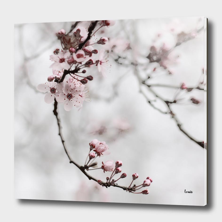 cherry blossom moments I