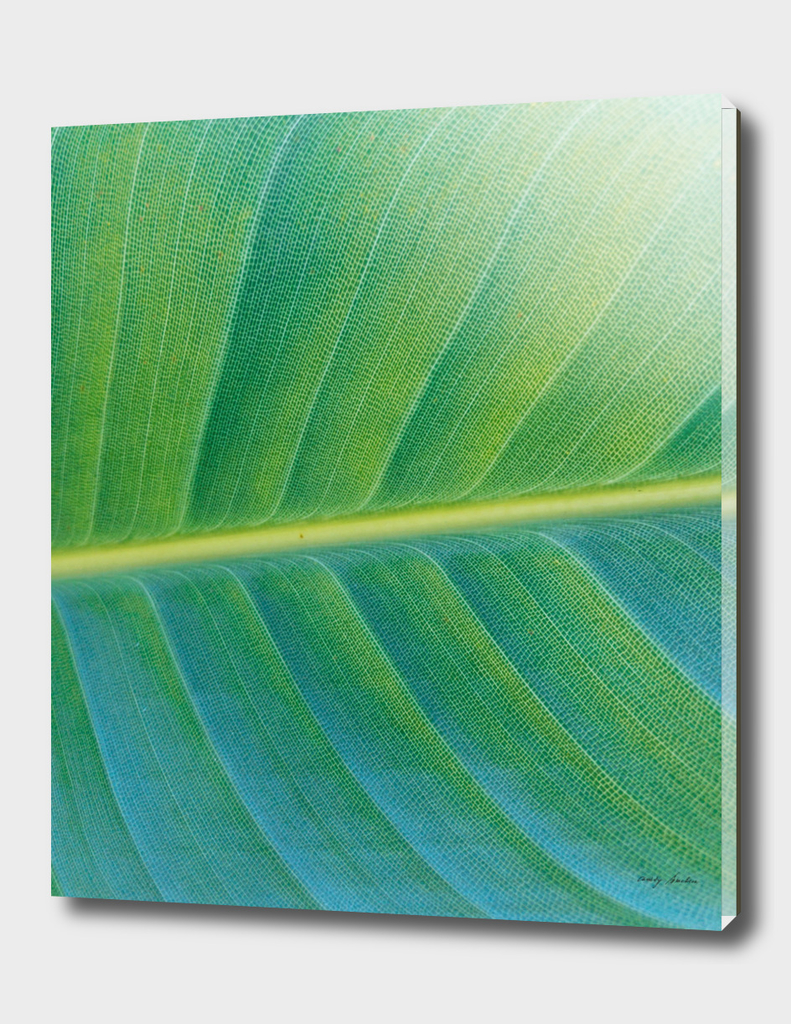 Bird of Paradise Palm