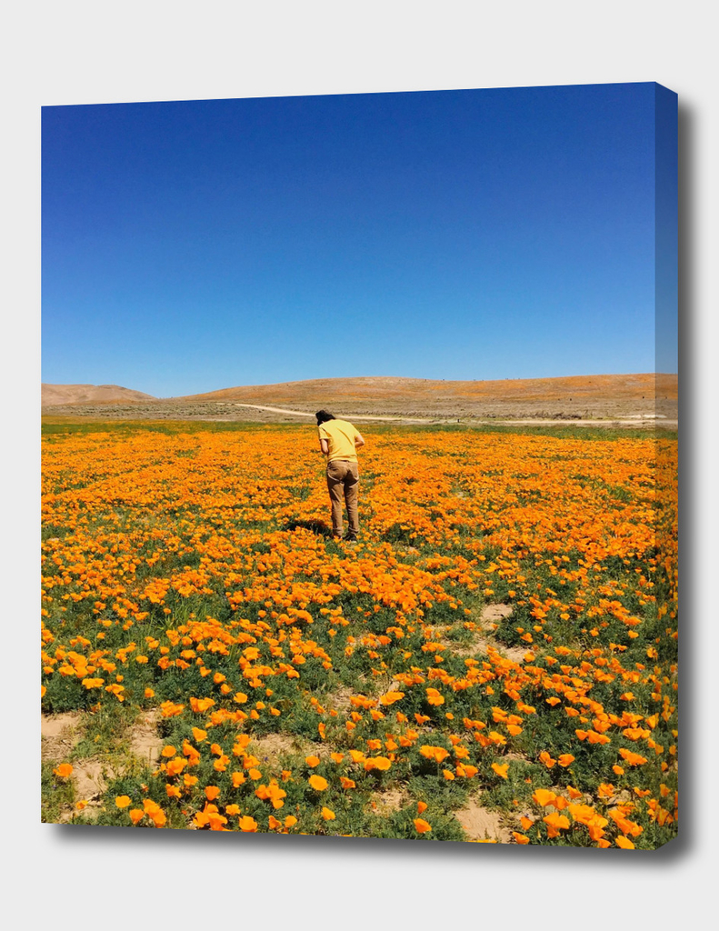 Surrounded by Poppies