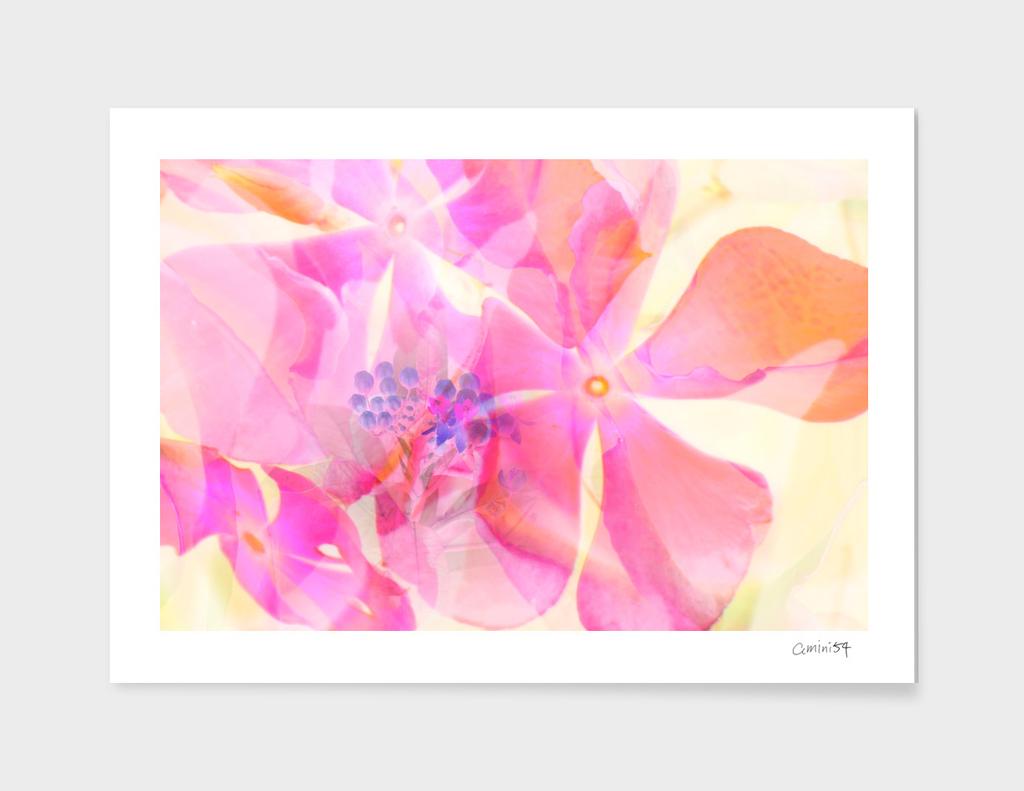 Wild Flower I