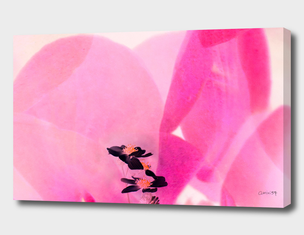 Wild Flower III