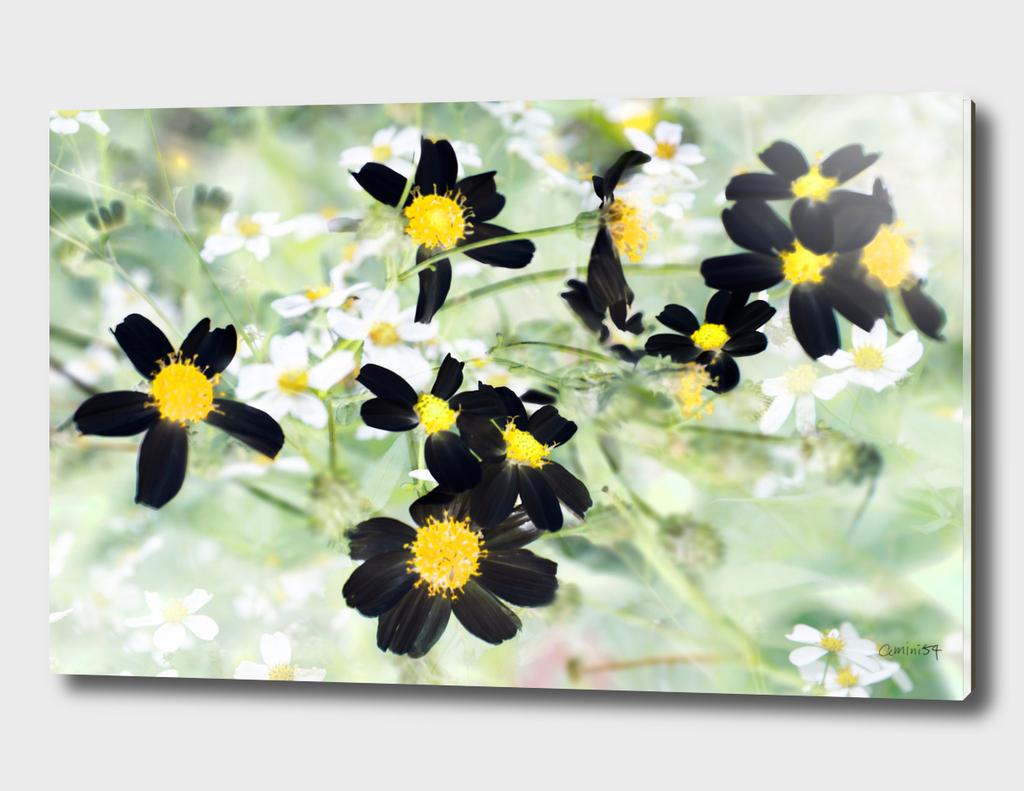 Wild Flowers VIII