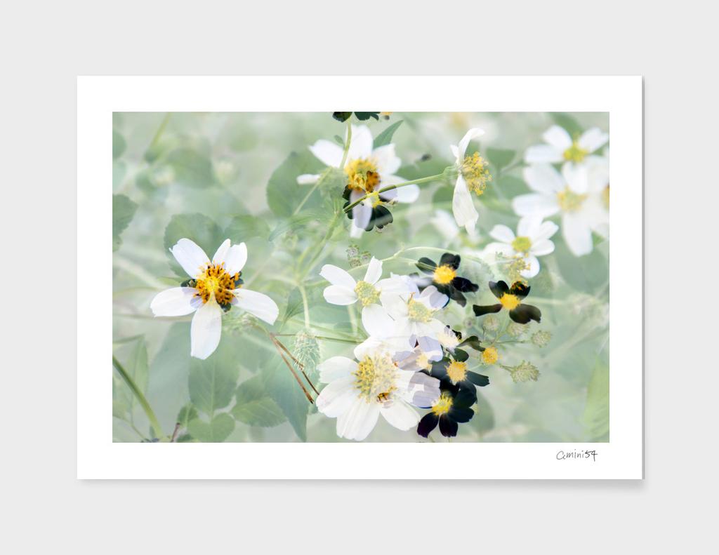 Wild Flowers IX