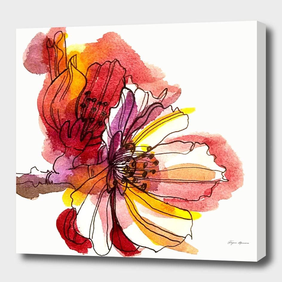 Apricot flower illustration