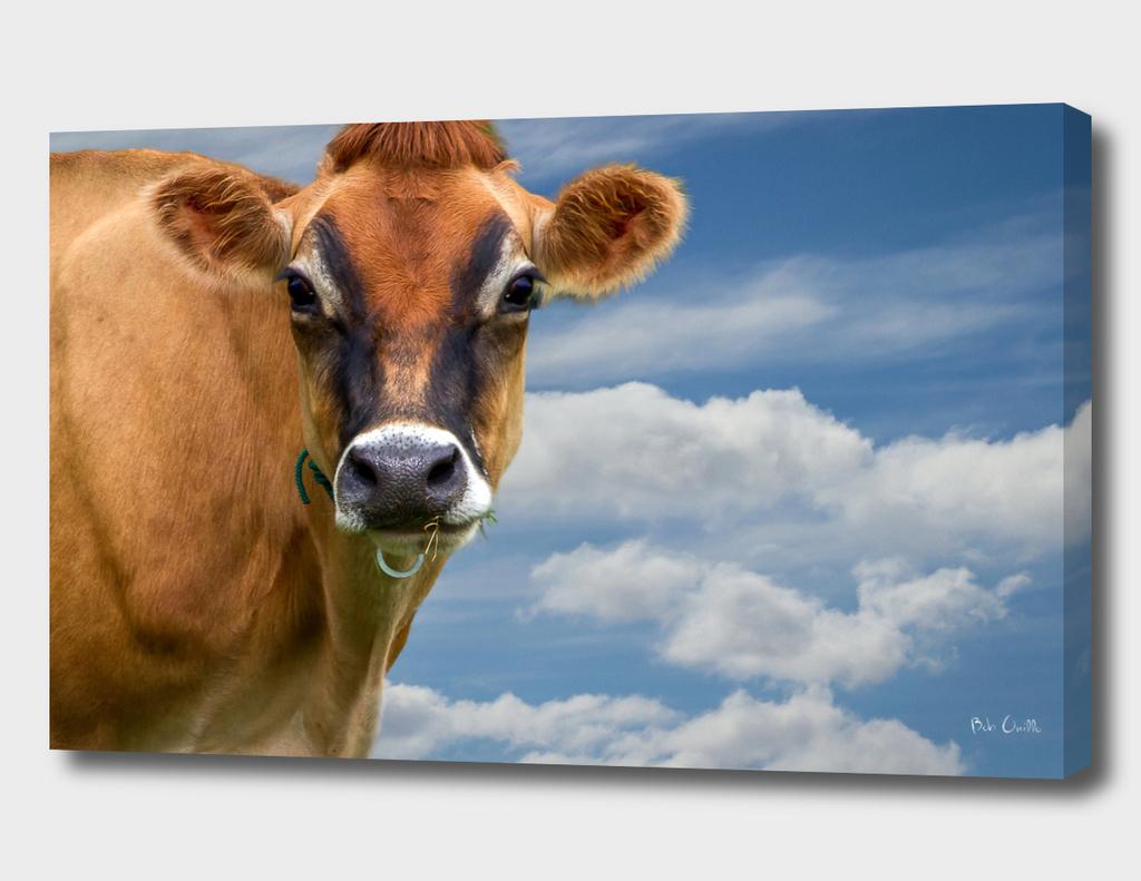 Beautiful Cow Beautiful day
