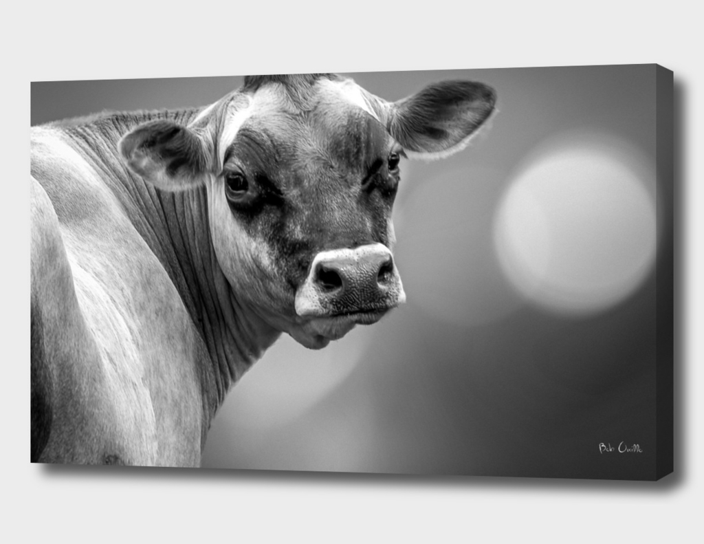 Classic Cow