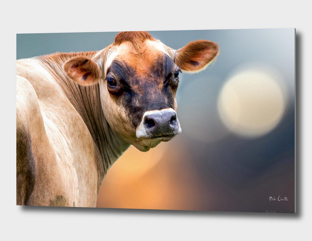 Beautiful Lady Cow