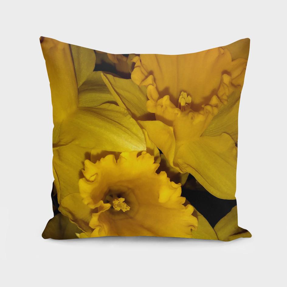 Daffodils LG03
