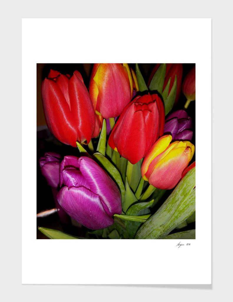 Tulips LG01