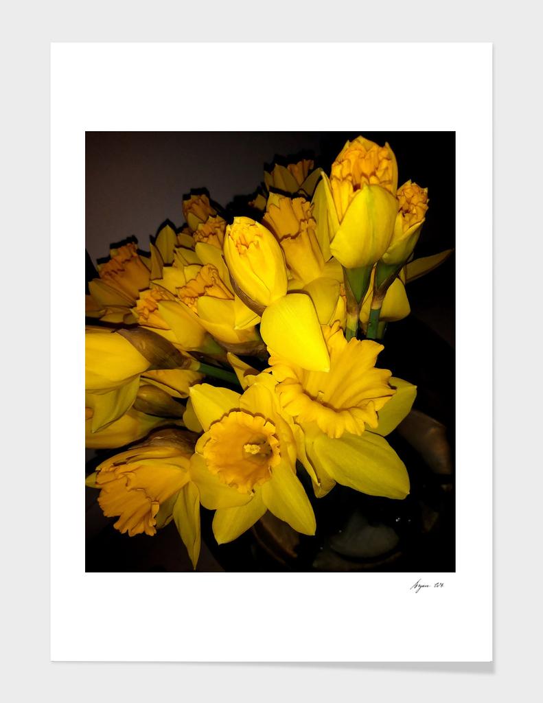 Daffodils LG04
