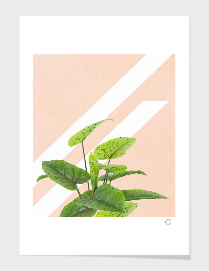 Botanical Abstract Art