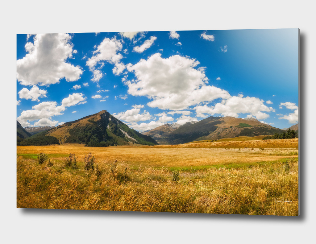 New Zealand landscape with golden grasses in South Island