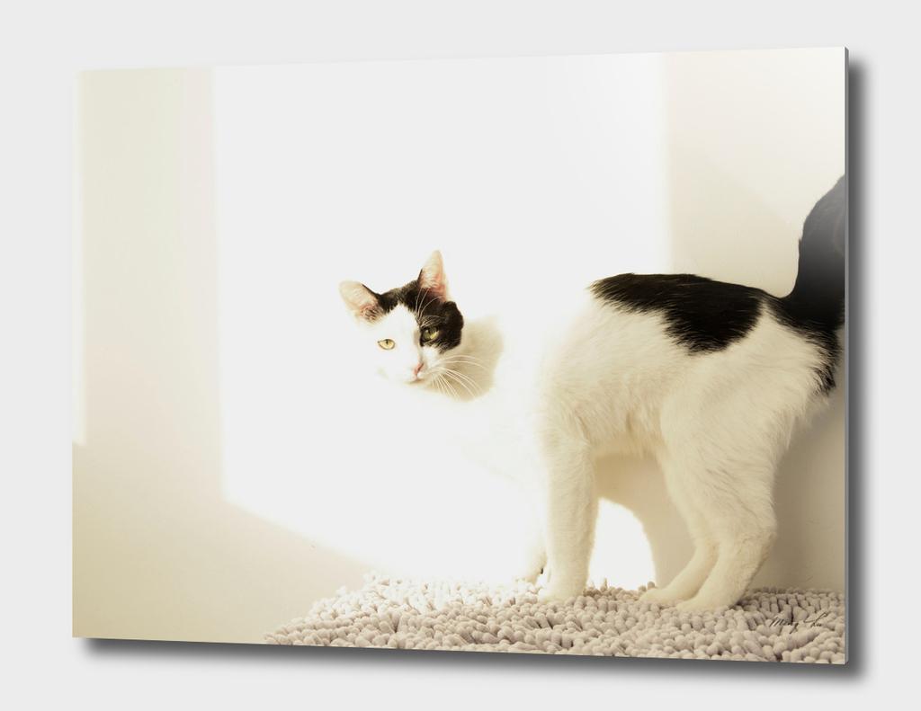 cat and sunlight