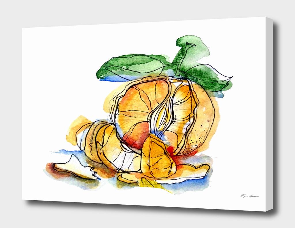 Tangerine illustration
