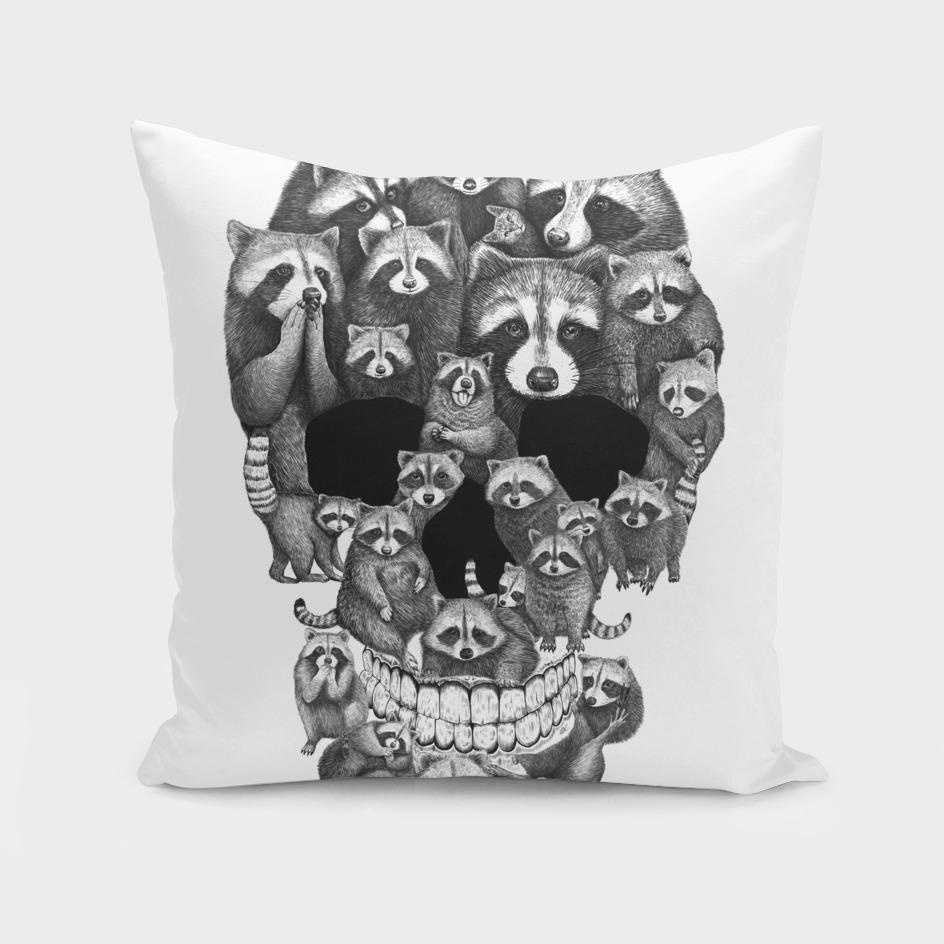 Skull from raccoons