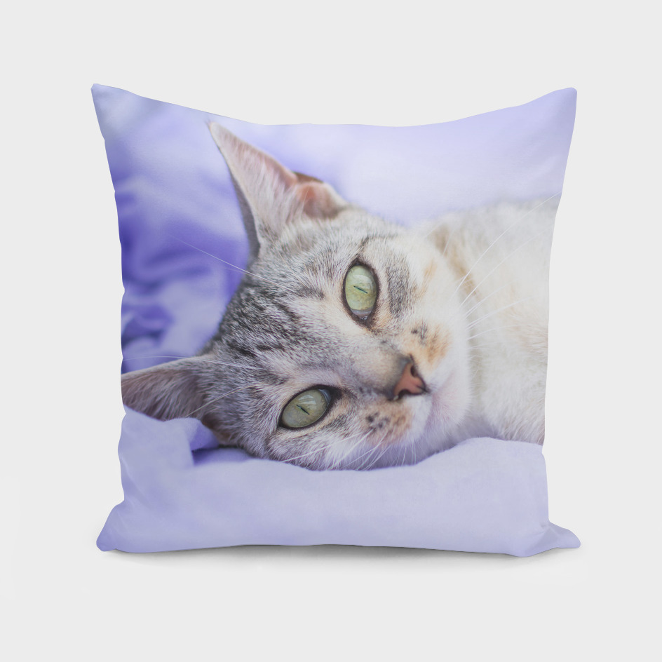 Silver tabby cat on purple blanket