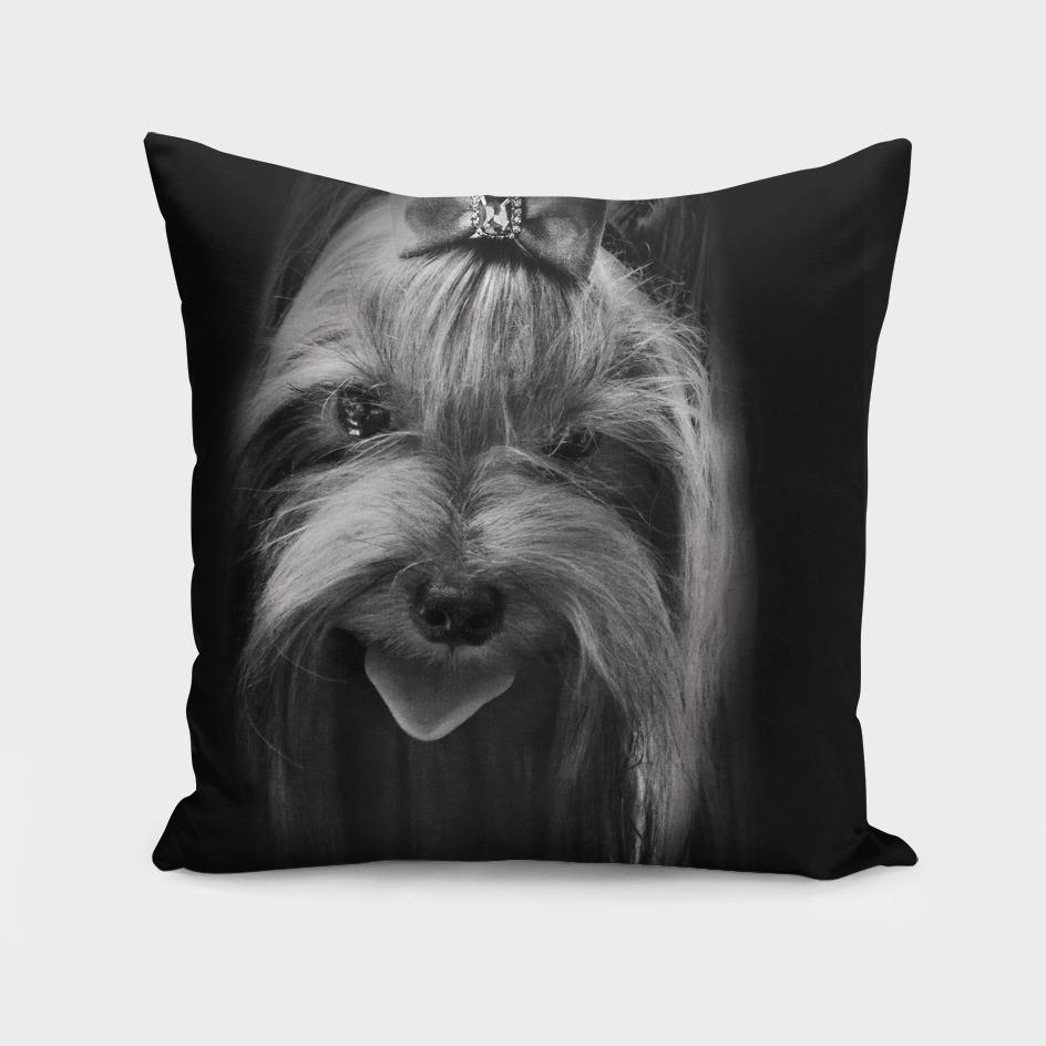 graceful creation portrait  Yorkshire terrier close-up