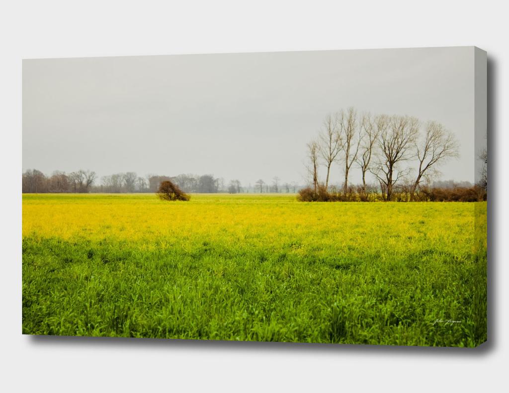 Field of Peace