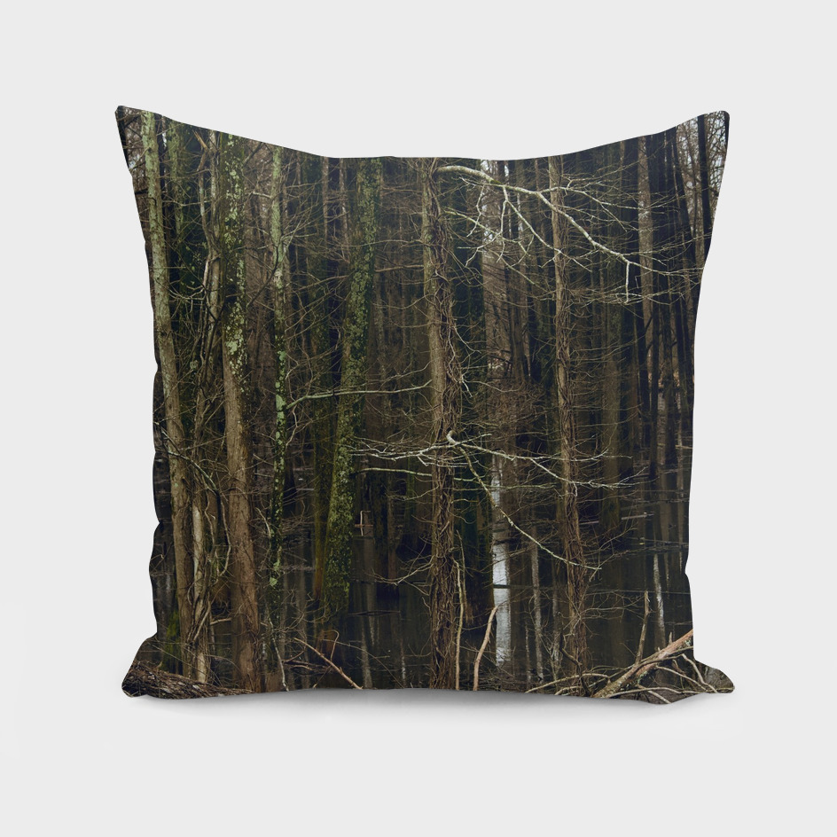 Back Water Cypress