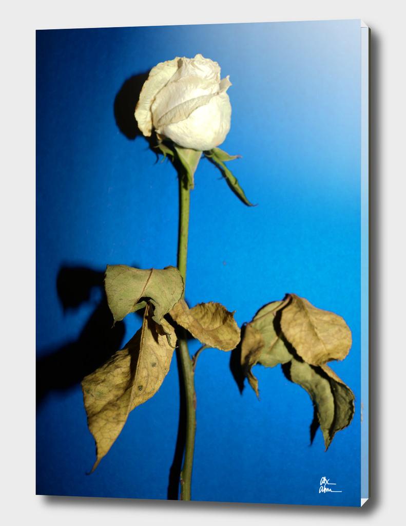 Pop Flower 03