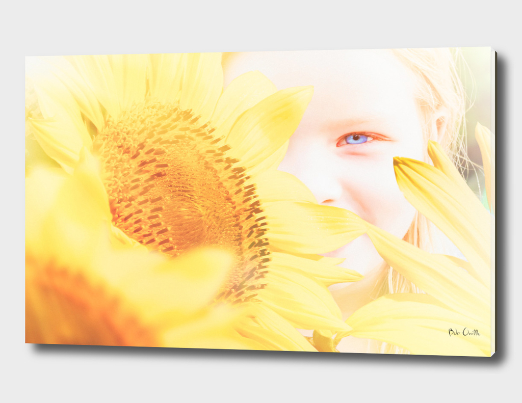 Summer and Sunflowers