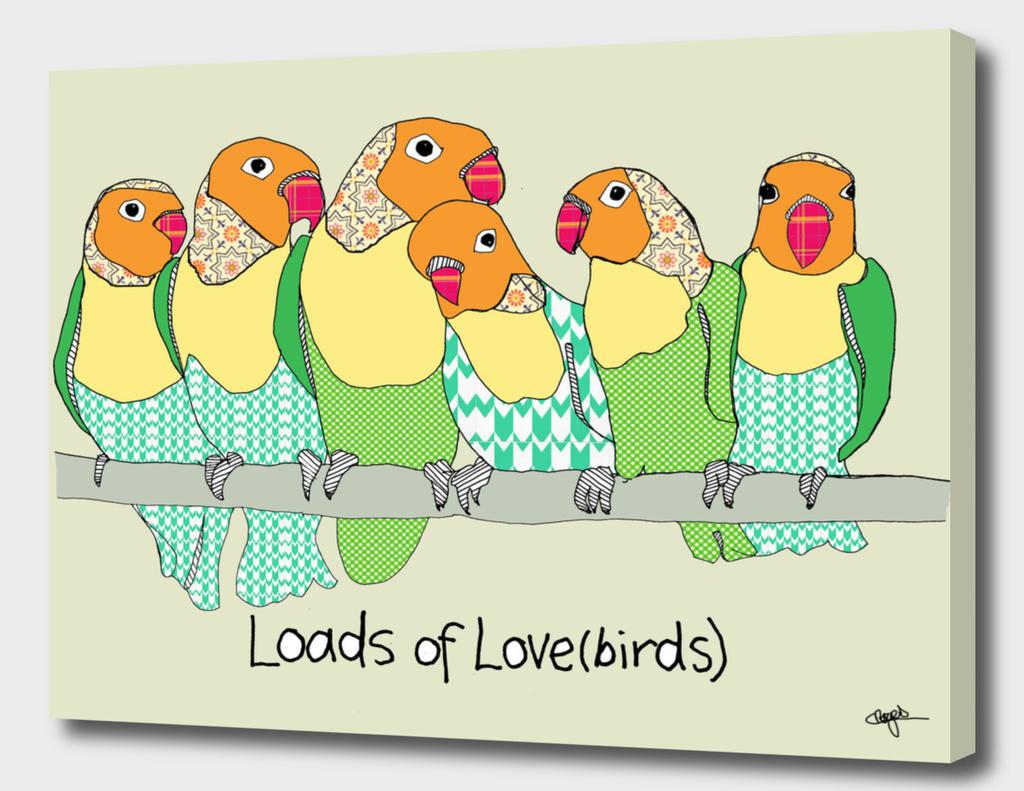 Loads of lovebirds