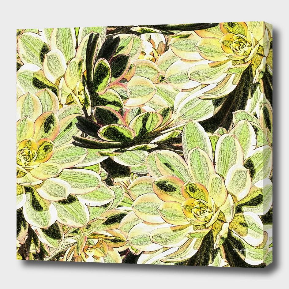 Yellow Desert Echeveria Pattern