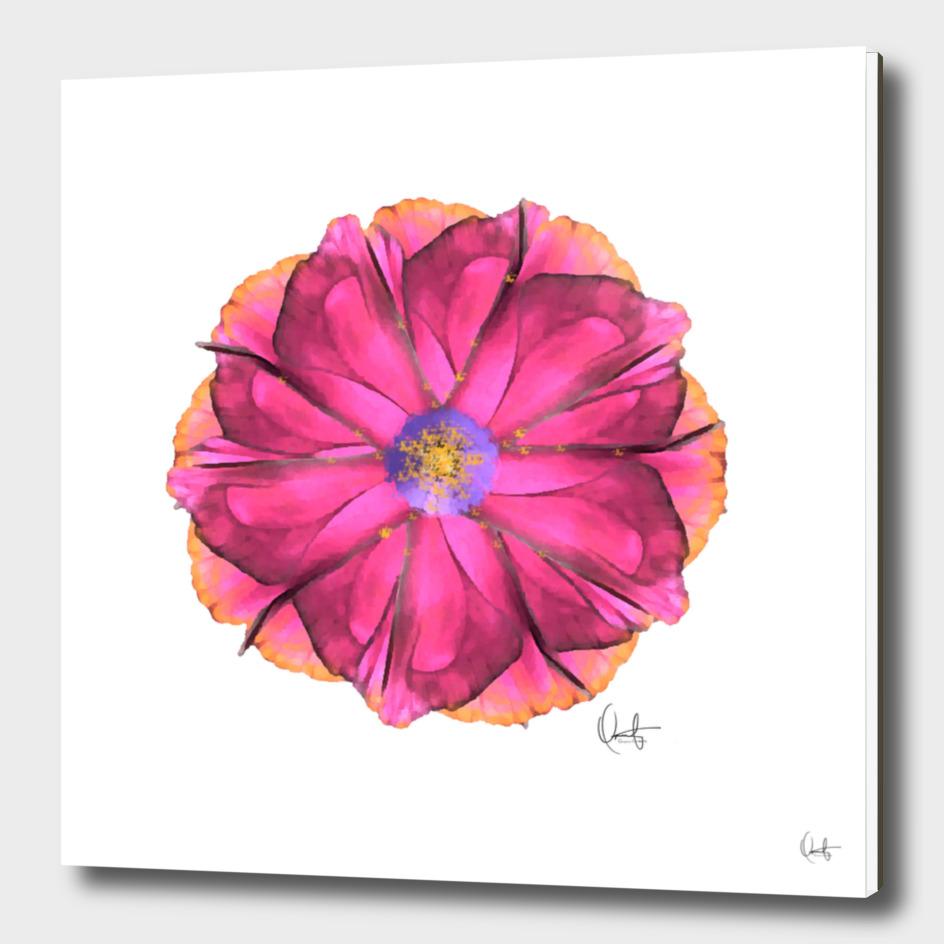 Athena Flower