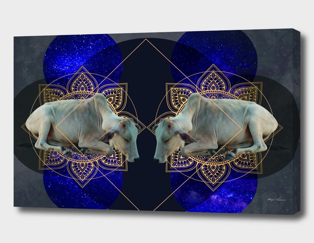 India Cosmologica