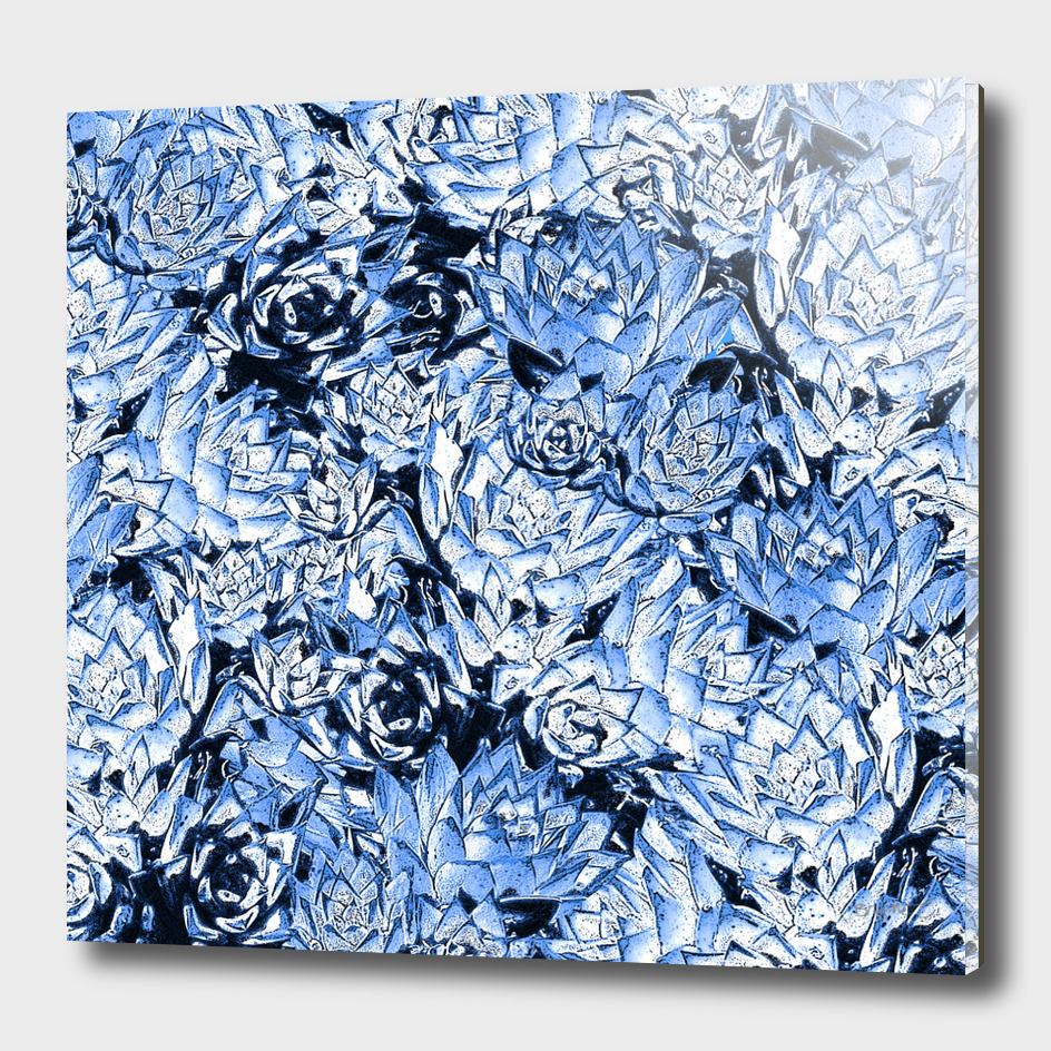 Blue Desert Echeveria Succulent Design