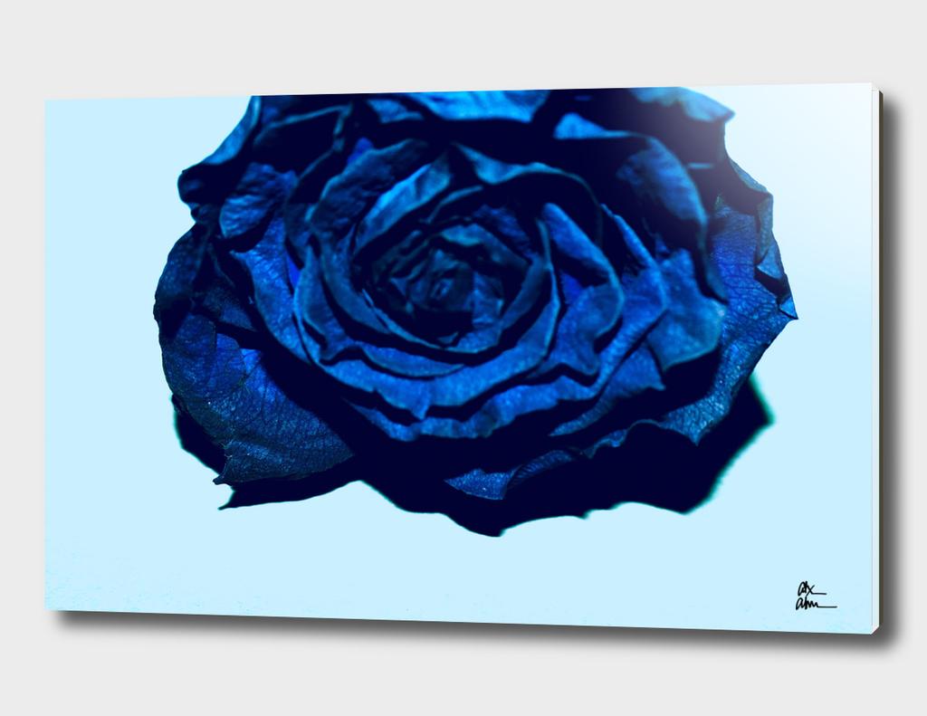 Pop Art Flower 03