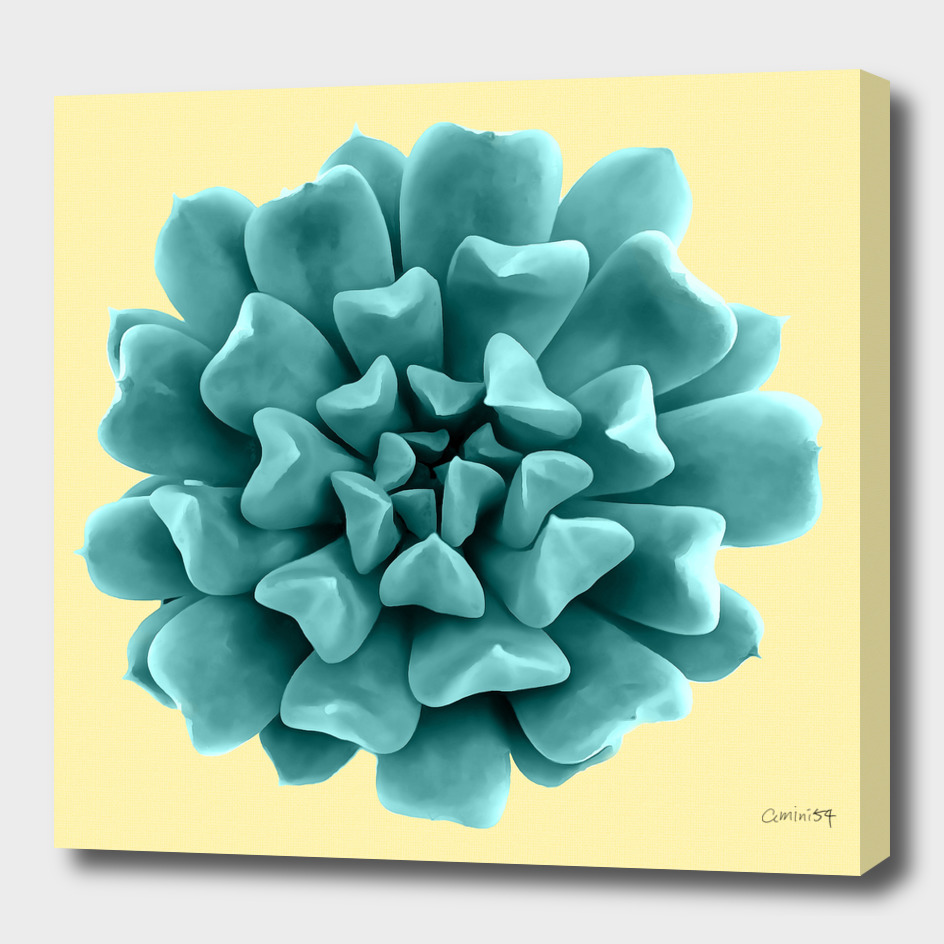 Teal Succulent Plant on Yellow Wall