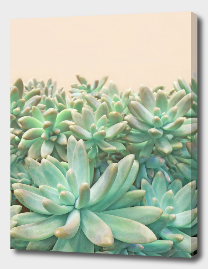 Blush Succulents