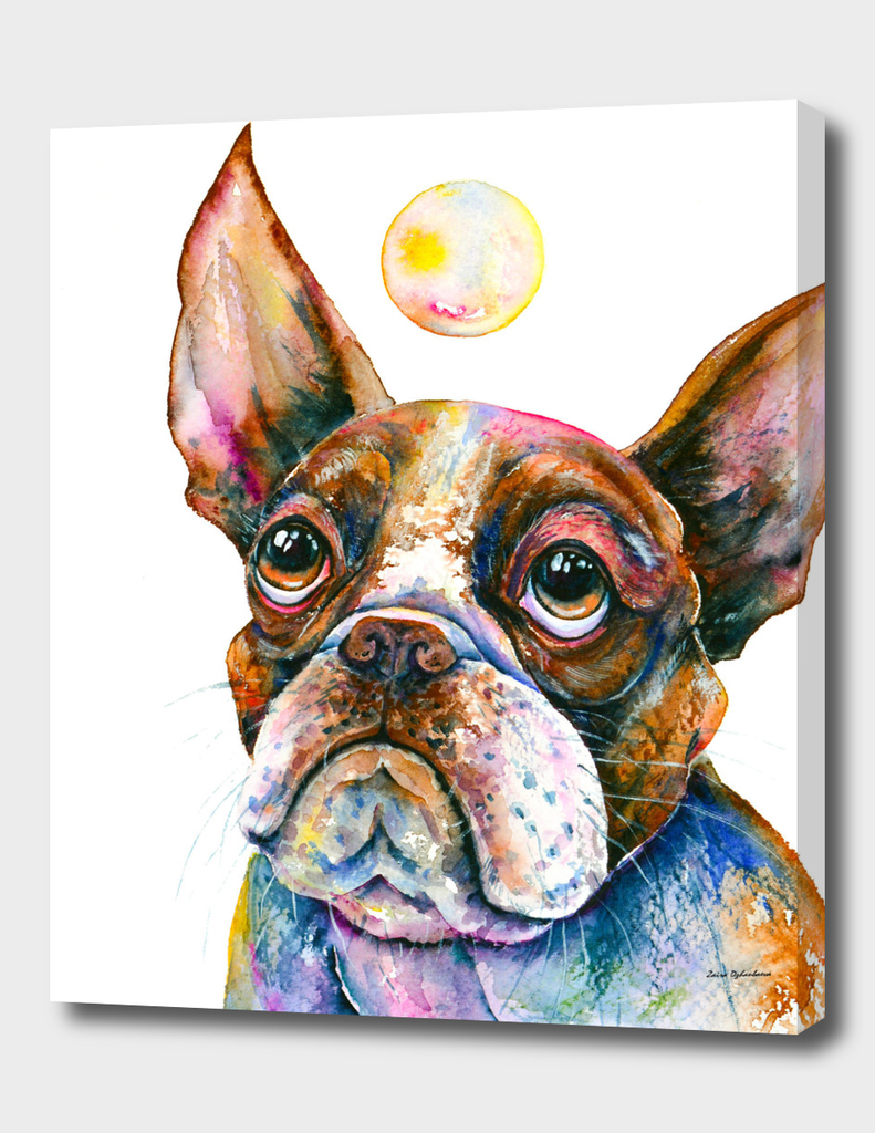 Boston Terrier Watching a Soap Bubble