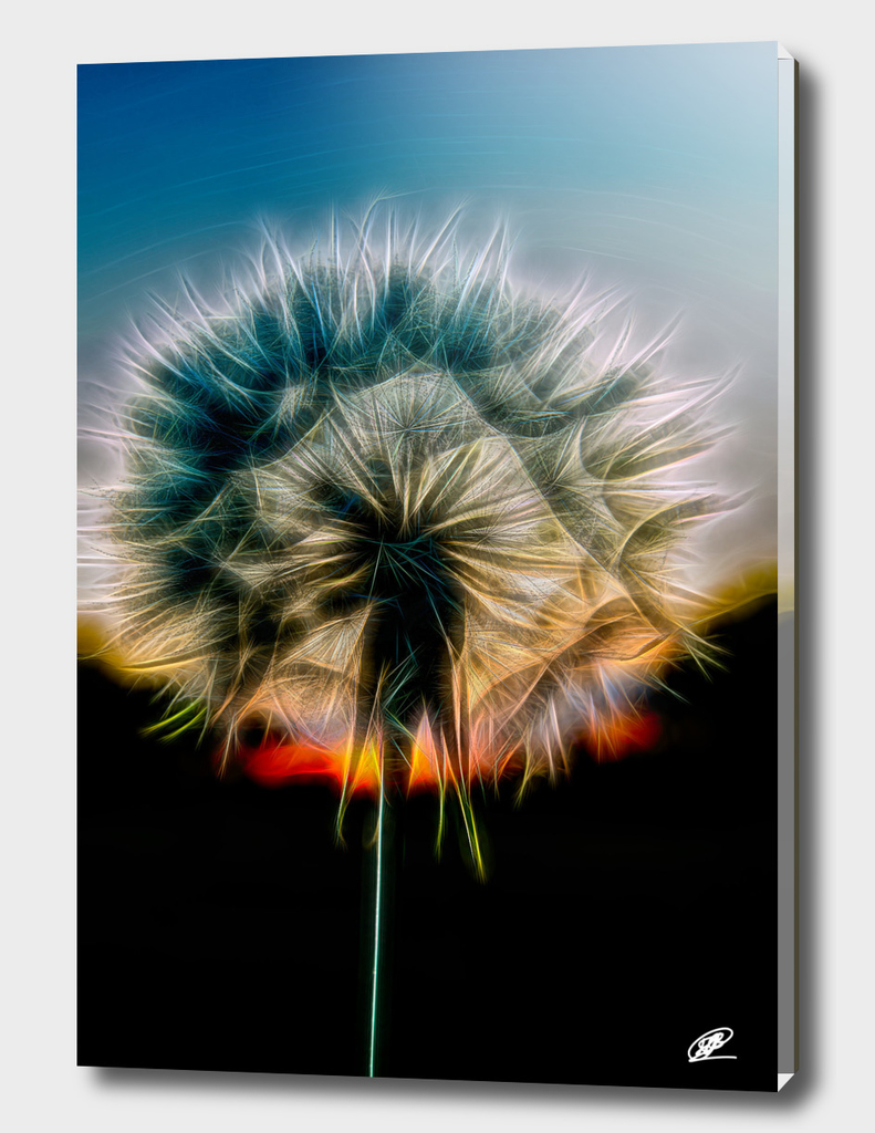 Dandelion close up photo neon