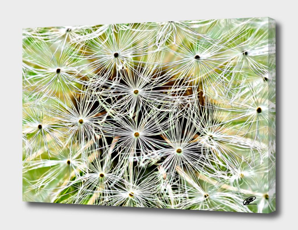 Dandelion macro shot oil look