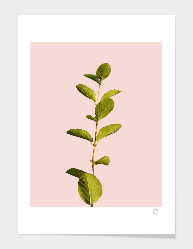 Botanical Art V3