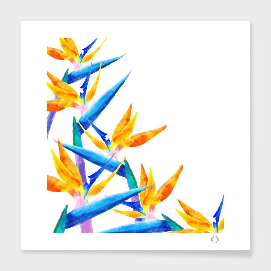 Bird of Paradise V2