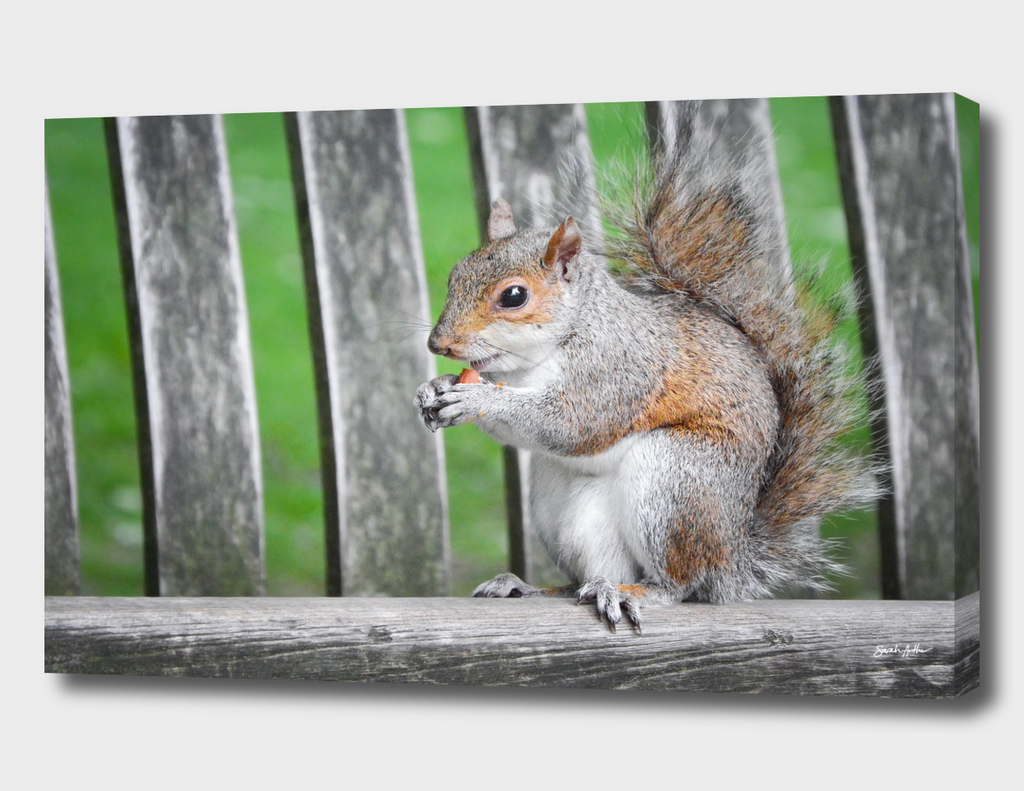 Squirrel Munchies