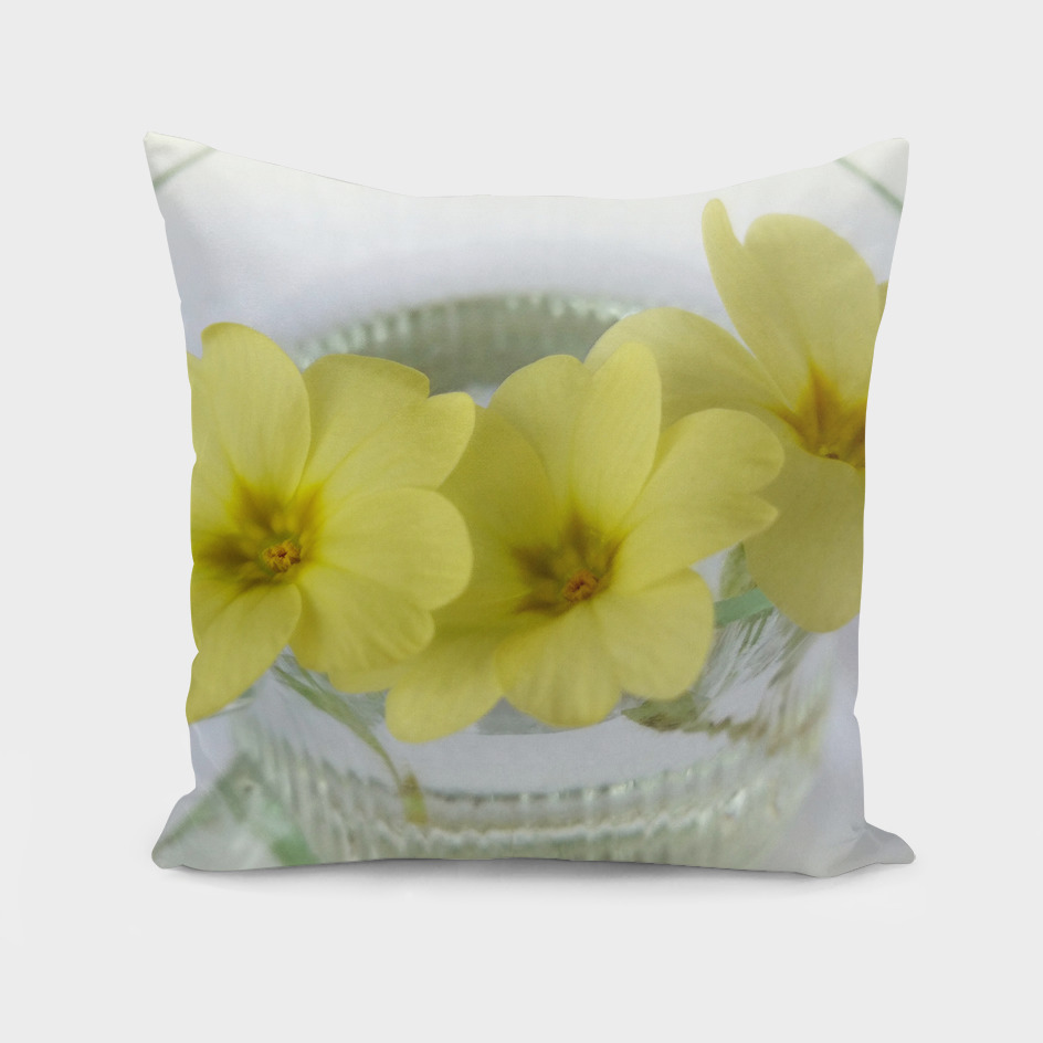primrose in a coffee cup