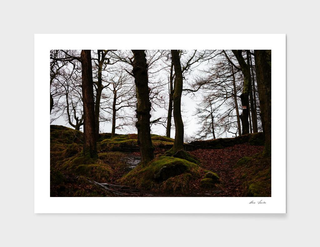 Wales_20