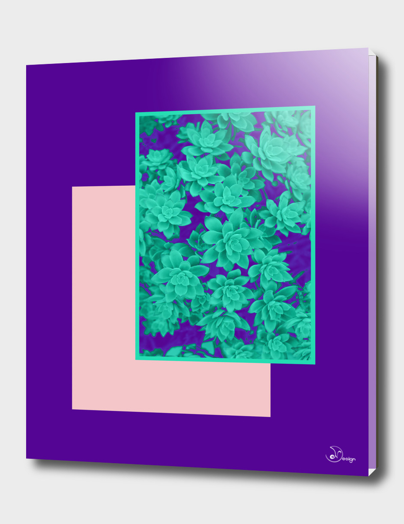 Neon Aeonium